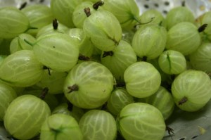 gooseberries-camelcsa-170611