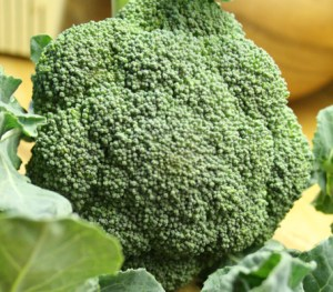 broccoli-camelCSA