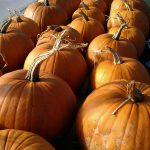 Pumpkins-stored-camelcsa-251013