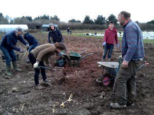 dockweed-digging-camelcsa-160314