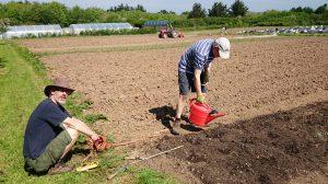 calabrese-planting-camelcsa-160514
