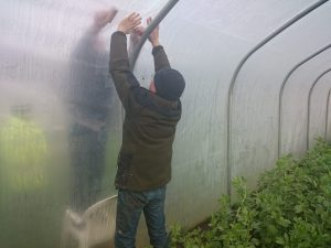 polytunnel-repair-camelcsa-120216