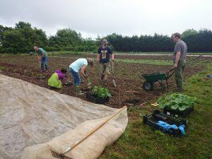 squash-pumpkin-planting-camelcsa-061216