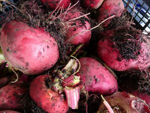 beetroot-chioggia-camelcsa-180817