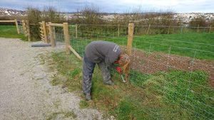 rabbit-proof-fencing-treraven-farm-camelcsa-010219