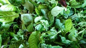 mixed-winter-salad-leaves-camelcsa-150219