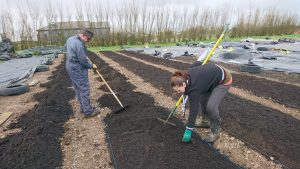 Prepping-veg-beds-camelcsa-0319
