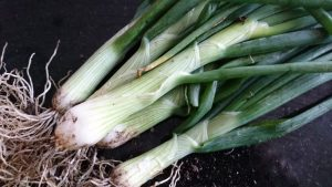 spring-onions-camelcsa-310519