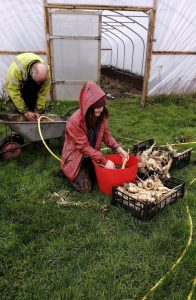 washing-parsnips-camelcsa-1812200