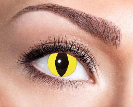 lentilles chat jaune