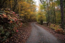 jeremy-fall-27-back-road