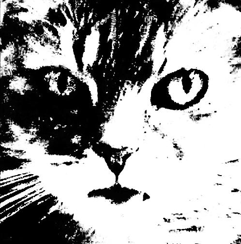 kevins-puma-rip