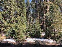 Snow Sequoia Park