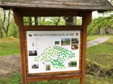 Chestnut forest & park