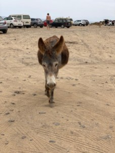Cofete beach car park and wild burros