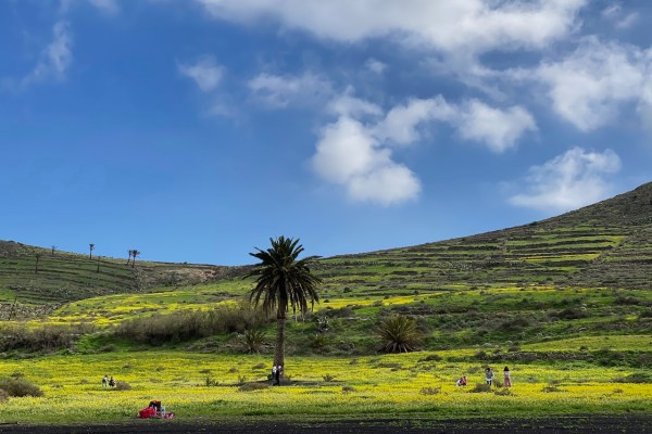 wildflowers in Lanzarote