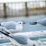 晴海埠頭 鳥