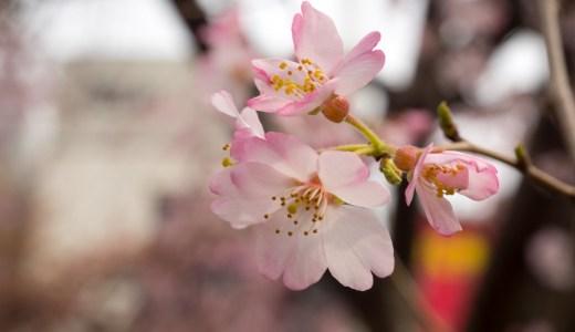 桜が咲く頃、東京のお花見スポット
