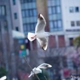 上野恩賜公園不忍池 鳥撮影