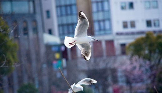 NikonD7200 上野恩賜公園にて鳥類の撮影