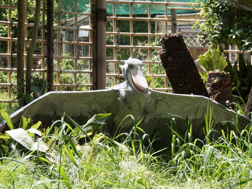 上野動物園 金網を消す裏技