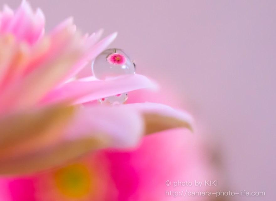 花びら水滴写り込み
