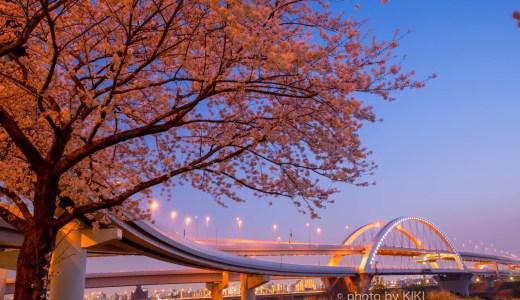 サクラと五色桜大橋を撮影してみました