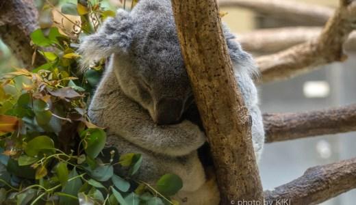 ニコンD7200 カワイイ動物たちに会いに多摩動物公園へ行ってきました