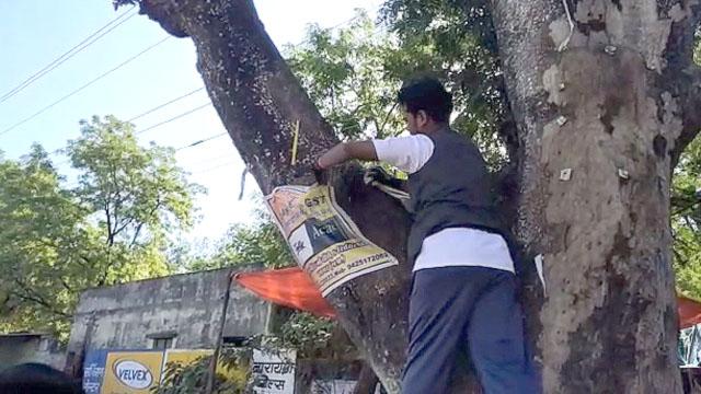 Green Trees in Sagar