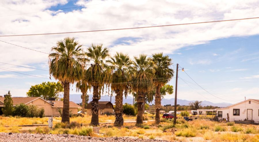 palm trees in Nevada