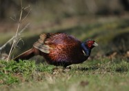 Minsmere (5 of 15)