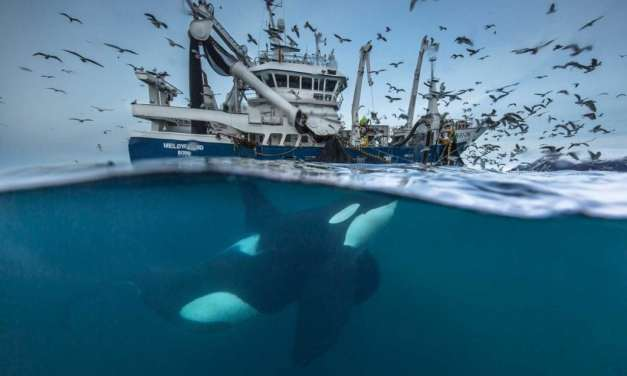 Wildlife Photographer of the Year 2016 first finalists revealed