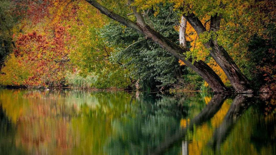Autumn photography: 08 Reflections