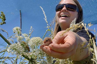 snapshot-3-harvest-mice-nick-upton-northamptonshire-documentary-winner