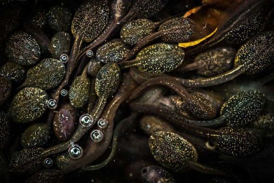tadpoles-jeannette-sakel-bristol-close-to-nature-winner