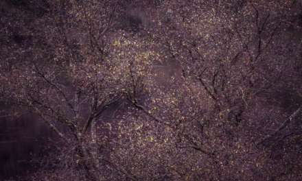 International Garden Photographer of the Year 2016 winners revealed