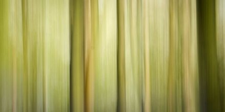 Simple Guide to Intentional Camera Movement