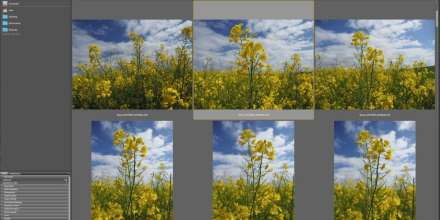 Download and organise your images in Adobe Bridge CC