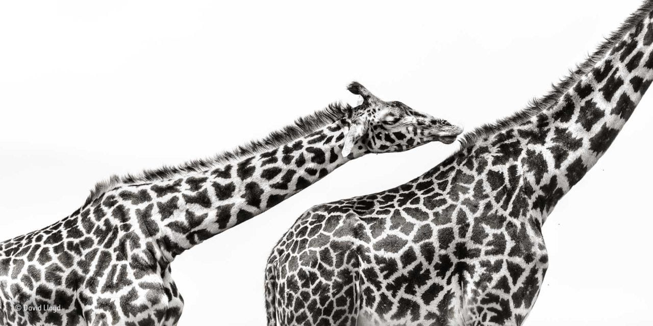 Wildlife Photographer of the Year launches People's Choice Award