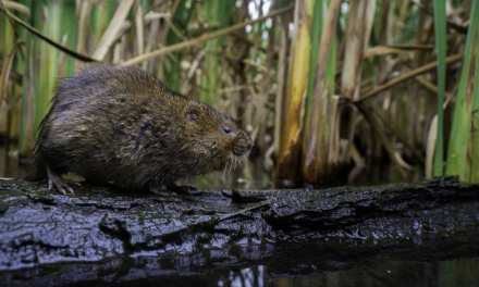 Wildlife to Photograph in the UK During April