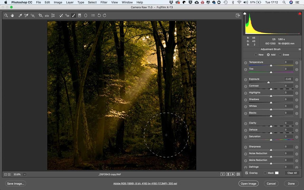 Fujifilm X-T3 raw files after 5 Minutes in Photoshop: Autumn woodland