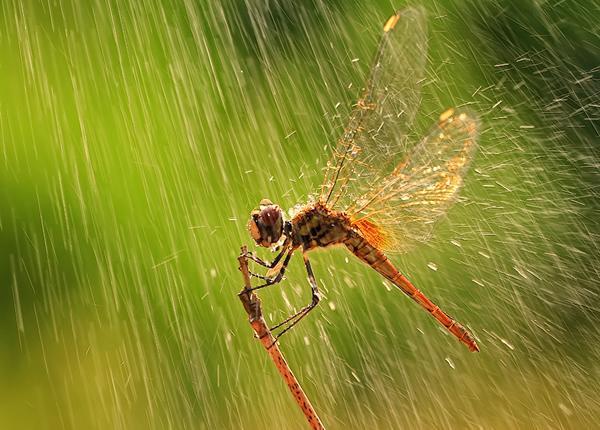 Nature Photograph