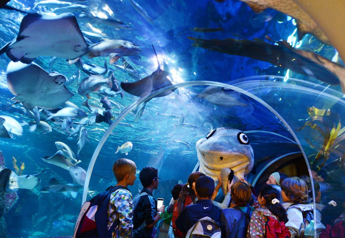 AkvaDom samyy krupnyy akvarium 14