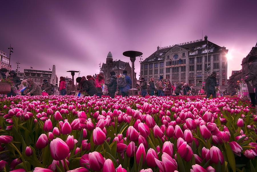 Амстердам, Нидерланды 77