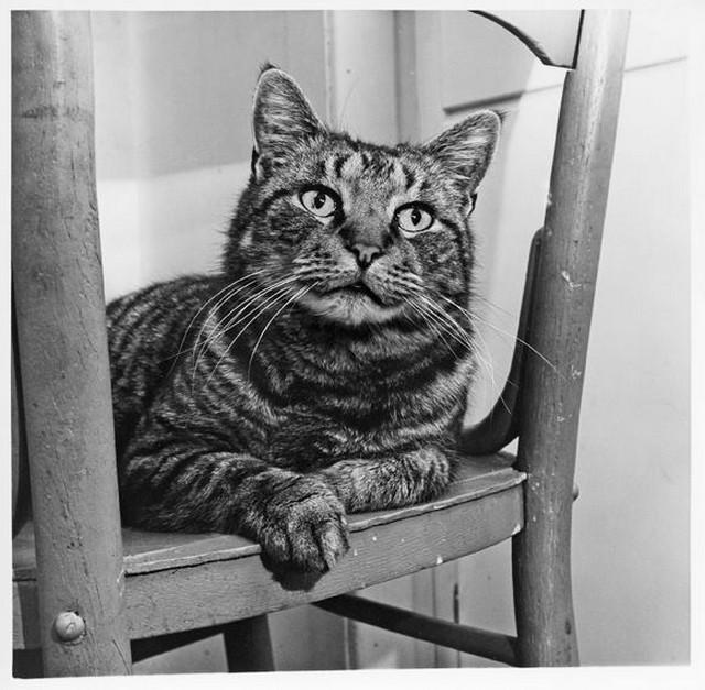 Уолтер Чандоха – человек, который 70 лет фотографировал кошек   32