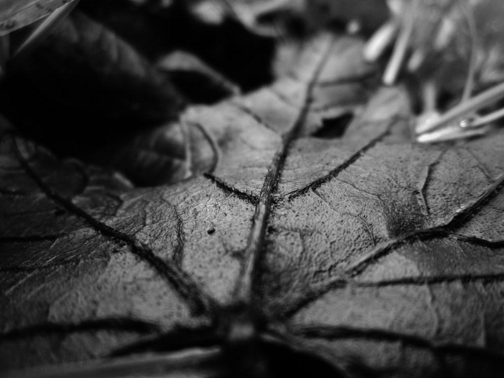 Wet Leaves (3/6)