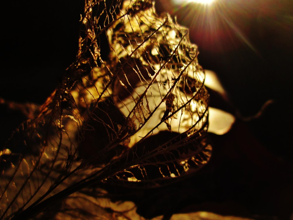 Leaf Skeletons At Sunset (2/4)