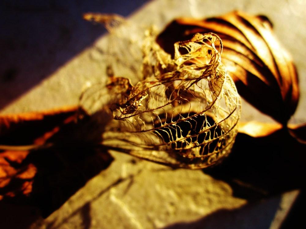 Leaf Skeletons At Sunset (4/4)