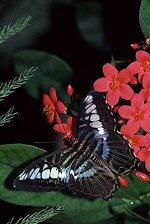 Butterfly photograph by Brent VanFossen