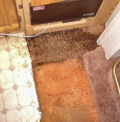 Mildew blackens the back corner of our carpet in the trailer